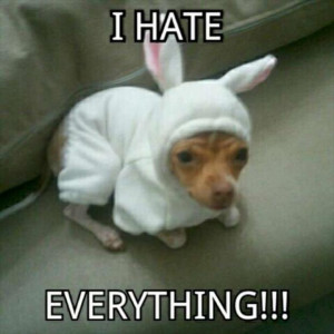 funny animal pictures having a bad day (19)