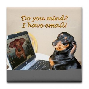 ... dog meme funny dachshund funny dachshund quotes dachshund through the