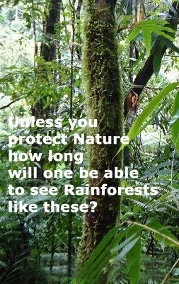 ... Nature, how long will one be able to see Rainforests like these