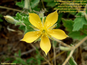 quotes christian nature bible verses with pictures inspirational bible ...