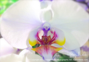 orchid love orchid flower night light
