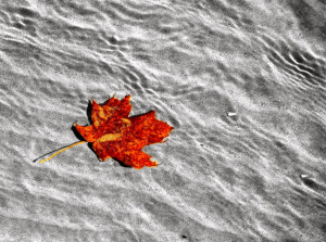 108348d1320613347 nature fall water leaf water jpg