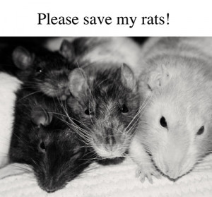 animals sick help pets rats Signal Boost rat