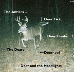 funny talking deer funny quotes to make you laugh out loud funny