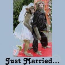 Credited Free Bridal Shower