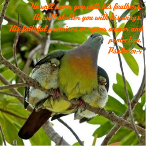 http://www.pics22.com/he-will-cover-you-with-his-feathers-bible-quote/