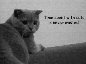 Cat Quotes | comments