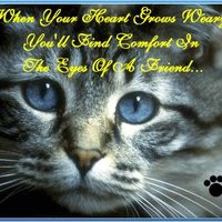 funny friend quotes photo: Eyes of a Friend cat_heartweary.jpg