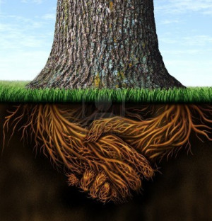 15491712-strong-deep-business-roots-as-a-tree-trunk-with-the-root-in ...