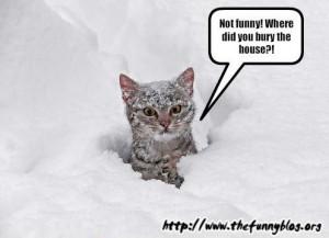 funny snow cat, am I fat, be straight, snowcat, 2012, funny winter ...