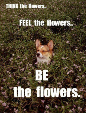 30 Funny animal captions - part 12 (30 pics), animal memes, animal ...