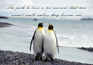photoshop art4 penguin love quote via time 2 motivational love
