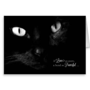 pet_sympathy_loss_of_a_cat_greeting_card ...