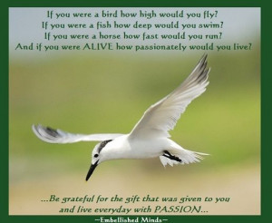 greatest quotes about life - flying bird