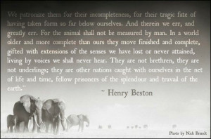 ... quotes about animals and one I wholeheartedly agree with... By Henry