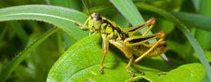 Kung Fu Grasshopper Quotes