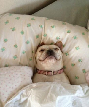 Hilarious Dog Pictures