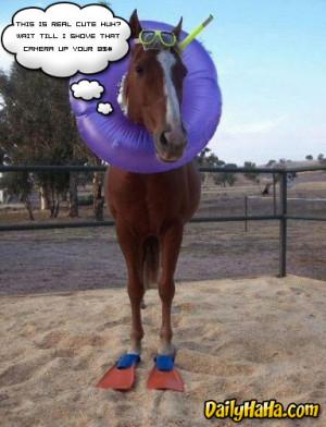 ... .gotsmile.net/images/2010/10/06/horse_swimming.jpg_1286397973.jpg