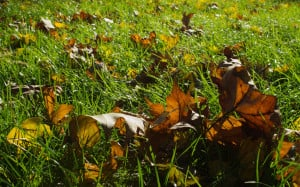 Leaves in grass background