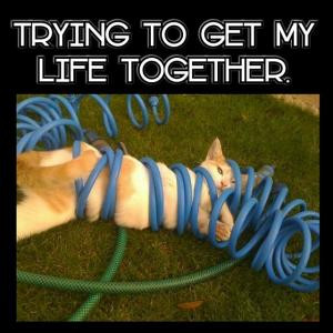 Trying to get my life together.