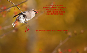 Beautiful Birds Photo Collection...Part 2