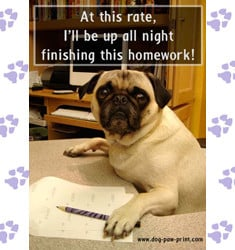funny dogs pug doing homework fun dog pictures with captions