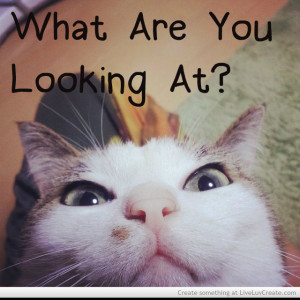 Funny Angry Cat Quotes