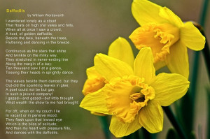 Daffodils - a poem by William Wordsworth. Daffodils in photo are by ...