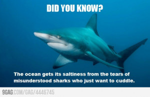 ... from the tears of misunderstood sharks who just want to cuddle