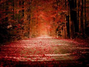 autumn wallpapers for desktop autumn wallpaper widescreen autumn ...