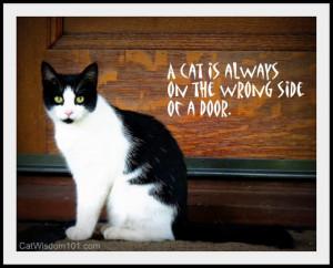 cat-quote-wrong-side-door
