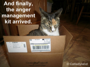 Anger Management and a Cattoo Winner!