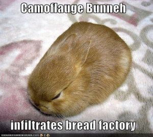 Funny Bunnies as requested!