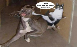 Animals With Funny Quotes 2013