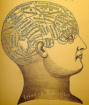 Representación frenológica de las áreas cerebrales en ...