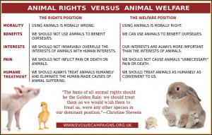 ... distinctions between the animal rights and animal welfare movements