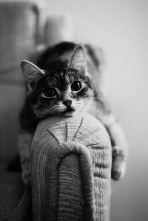 cat, cute, kitten, kitty, lovely, meow, photography