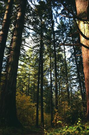trees nature forest Woods Oregon winter woods Beaverton highland