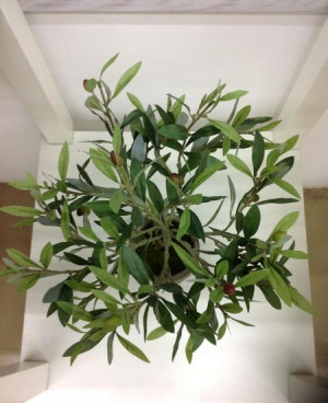 ... olive tree amp plastic olive tree for outdoor artificial olive