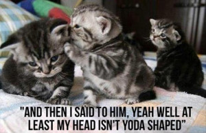 funny kittens, quotes