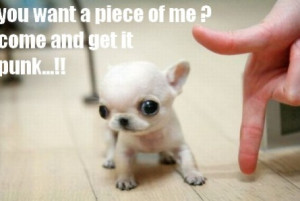 funny cute puppies quotes source http funnypics co photo cutepuppy6