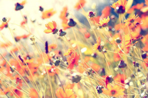 flowers, grass, nature, photography, plants, pretty - inspiring pic...