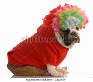 Related Pictures dog dressed up and wearing sunglasses